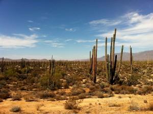 Desert view. Baja California May 2013