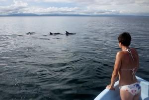Spotting dolphins near Riversdale November 2013